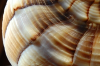 Whelk On The Beach (Click to Enlarge)